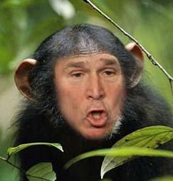 Michelle Obama Monkey